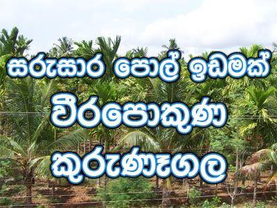Coconut land for Sale at Limbuwa, Kurunegala  - Sell Buy