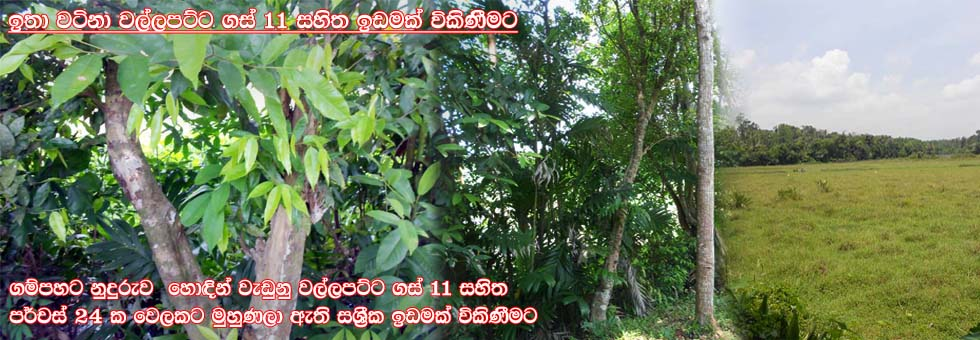24 Perches Land For Sale at Orutota Road, Gampaha  - Sell