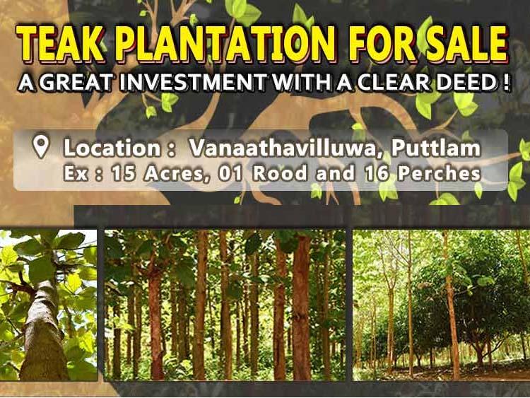 Teak Plantation Land for sale at Vanaathavilluwa, Puttalam
