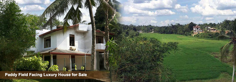 Paddy Field Facing Luxury House for Sale - Sell Buy Rent